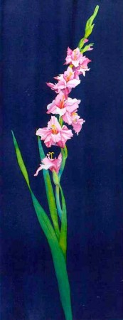 Gladiola painting by Sandy Haight