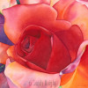 Watercolor painting of red rose filling the page