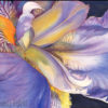 Close up watercolor painting of an iris.