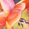 Watercolor painting up close of two orange tulips;