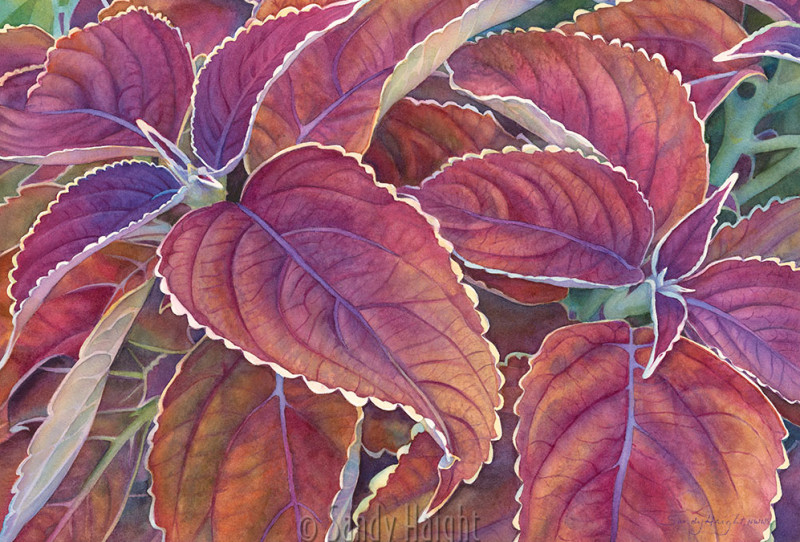 Watercolor painting of purple coleus leaves.