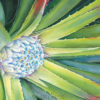 Close up watercolor painting of an aloe plant.