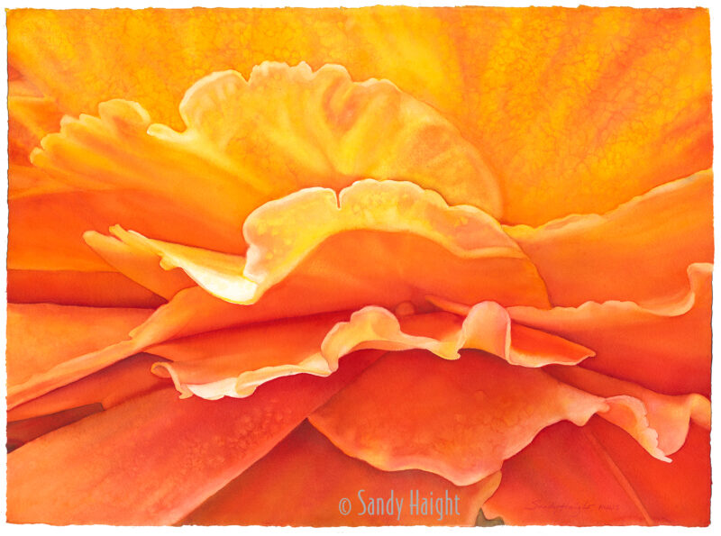 The close up of this yellow rose appears to be a sunrise!