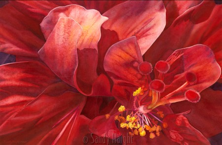 Watercolor painting of red double hibiscus bloom.