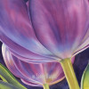Two big purple tulips are seen in this watercolor painting from underneath.