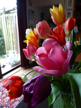 reference photo of a bouquet of colorful tulips