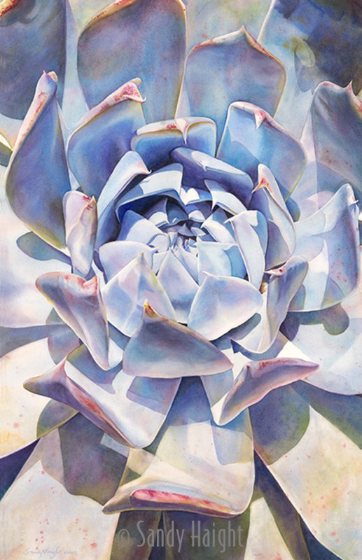 Large watercolor painting of macro view of echeveria succulent painted in blues and neutral colors.
