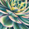 Lots of petals painted in intense watercolor with green and yellow stripes & pink edges of this succulent grow as a florette pattern on a diagonally oriented bloom creating a rippling pattern across the image.