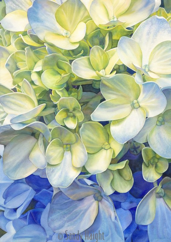 Vertical watercolor macro view of a hydrangea bloom in yellows and blues